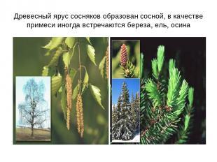 Древесный ярус сосняков образован сосной, в качестве примеси иногда встречаются