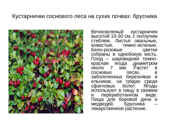 Кустарнички соснового леса на сухих почвах: брусника Вечнозеленый кустарничек высотой 10-30 см, с ползучим стеблем. Листья овальные, кожистые, темно-зеленые. Бело-розовые цветки собраны в однобокую кисть. Плод – шаровидная темно-красная ягода диамет…