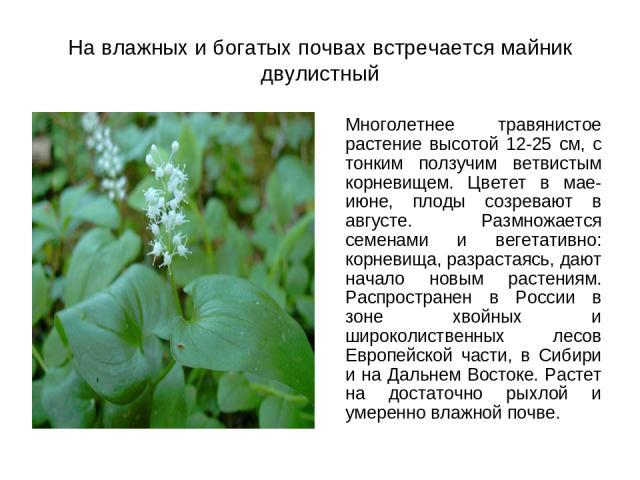 На влажных и богатых почвах встречается майник двулистный Многолетнее травянистое растение высотой 12-25 см, с тонким ползучим ветвистым корневищем. Цветет в мае-июне, плоды созревают в августе. Размножается семенами и вегетативно: корневища, разрас…