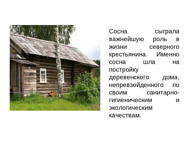 Сосна сыграла важнейшую роль в жизни северного крестьянина. Именно сосна шла на постройку деревенского дома, непревзойденного по своим санитарно-гигиеническим и экологическим качествам.