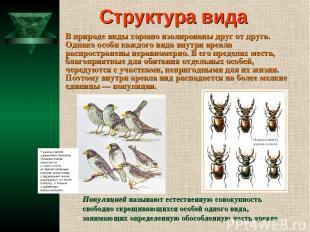 Структура вида В природе виды хорошо изолированы друг от друга. Однако особи каж