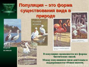 Популяция – это форма существования вида в природе В популяциях проявляются все