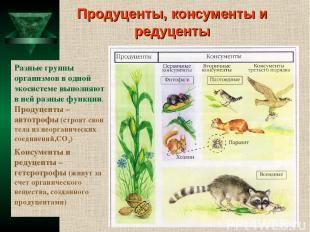 Продуценты, консументы и редуценты Разные группы организмов в одной экосистеме в