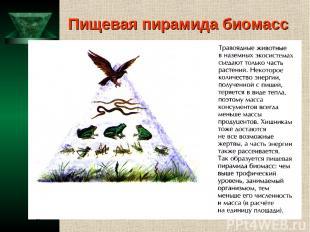 Пищевая пирамида биомасс