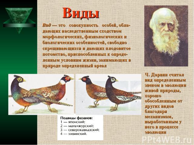 Виды Ч. Дарвин считал вид определенным звеном в эволюции живой природы, хорошо обособленным от других видов благодаря механизмам, выработанным у него в процессе эволюции Вид — это совокупность особей, обла- дающих наследственным сходством морфологич…