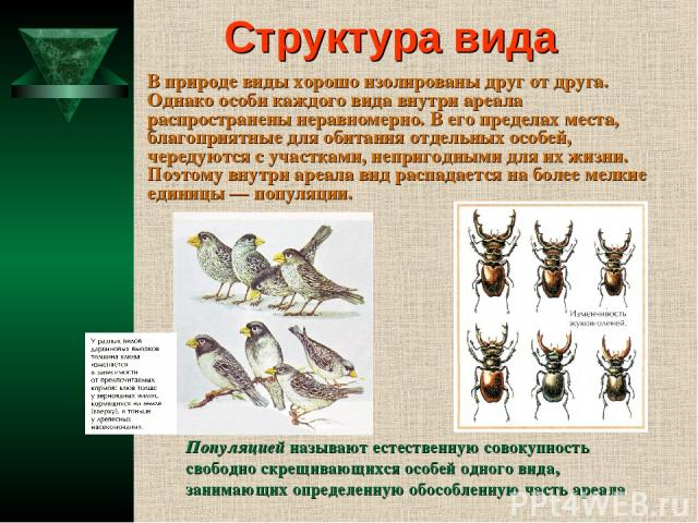 Структура вида В природе виды хорошо изолированы друг от друга. Однако особи каждого вида внутри ареала распространены неравномерно. В его пределах места, благоприятные для обитания отдельных особей, чередуются с участками, непригодными для их жизни…