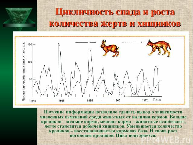 Цикличность спада и роста количества жертв и хищников Изучение информации позволило сделать вывод о зависимости численных изменений среди животных от наличия кормов. Больше кроликов – меньше корма, меньше корма – животные ослабевают, легче становятс…