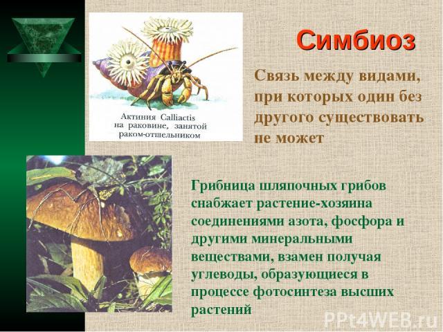 Симбиоз Связь между видами, при которых один без другого существовать не может Грибница шляпочных грибов снабжает растение-хозяина соединениями азота, фосфора и другими минеральными веществами, взамен получая углеводы, образующиеся в процессе фотоси…