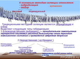 К основным методам селекции относятся: - гибридизация - отбор Традиционными мето