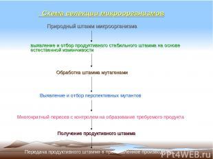 Схема селекции микроорганизмов Природный штамм микроорганизма выявление и отбор