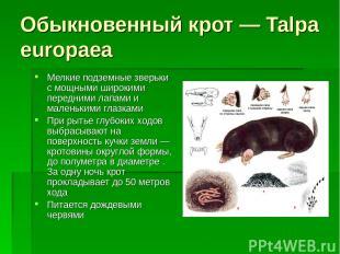 Обыкновенный крот — Talpa europaea Мелкие подземные зверьки с мощными широкими п