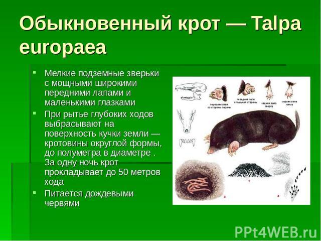 Обыкновенный крот — Talpa europaea Мелкие подземные зверьки с мощными широкими передними лапами и маленькими глазками При рытье глубоких ходов выбрасывают на поверхность кучки земли — кротовины округлой формы, до полуметра в диаметре . За одну ночь …