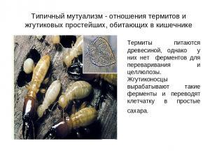Типичный мутуализм - отношения термитов и жгутиковых простейших, обитающих в киш