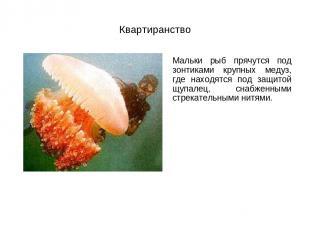 Квартиранство Мальки рыб прячутся под зонтиками крупных медуз, где находятся под