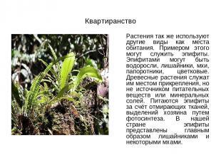 Квартиранство Растения так же используют другие виды как места обитания. Примеро