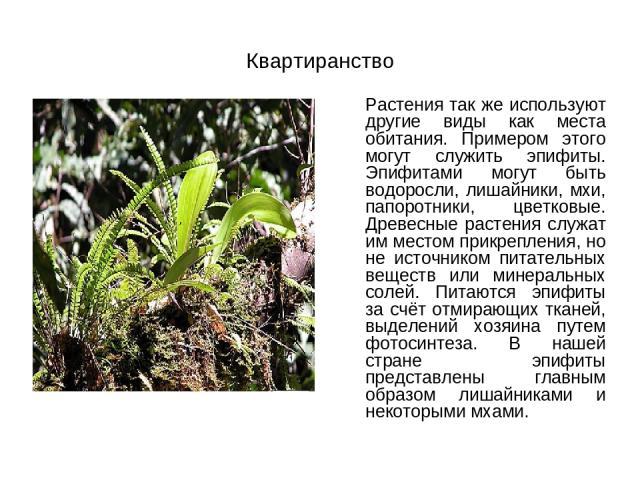 Квартиранство Растения так же используют другие виды как места обитания. Примером этого могут служить эпифиты. Эпифитами могут быть водоросли, лишайники, мхи, папоротники, цветковые. Древесные растения служат им местом прикрепления, но не источником…