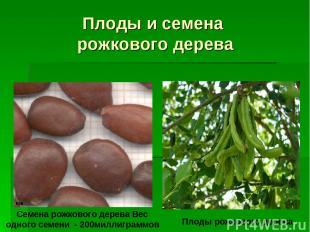 Плоды и семена рожкового дерева Семена рожкового дерева Вес одного семени - 200м