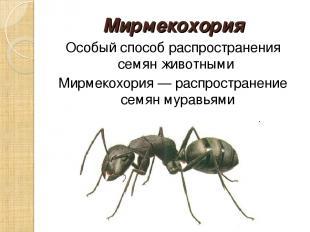 Мирмекохория Особый способ распространения семян животными Мирмекохория — распро