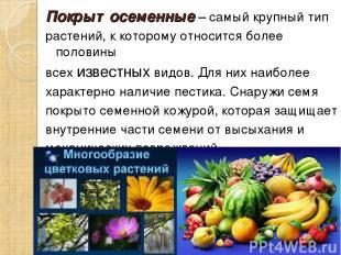 Покрытосеменные – самый крупный тип растений, к которому относится более половин