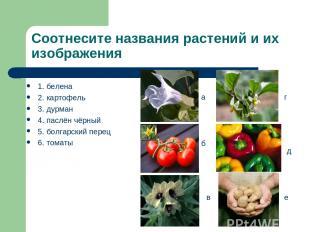 Соотнесите названия растений и их изображения 1. белена 2. картофель 3. дурман 4