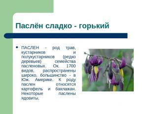 Паслён сладко - горький ПАСЛЕН - род трав, кустарников и полукустарников (редко
