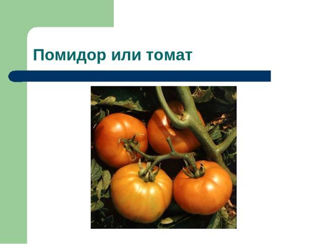 Помидор или томат