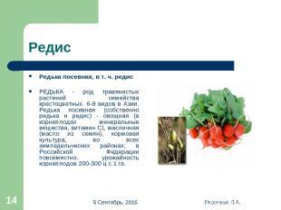 * Яковлева Л.А. * Редис Редька посевная, в т. ч. редис РЕДЬКА - род травянистых