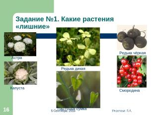 * Яковлева Л.А. * Задание №1. Какие растения «лишние» Редька чёрная Астра Капуст