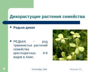 * Яковлева Л.А. * Дикорастущие растения семейства Редька дикая РЕДЬКА - род трав