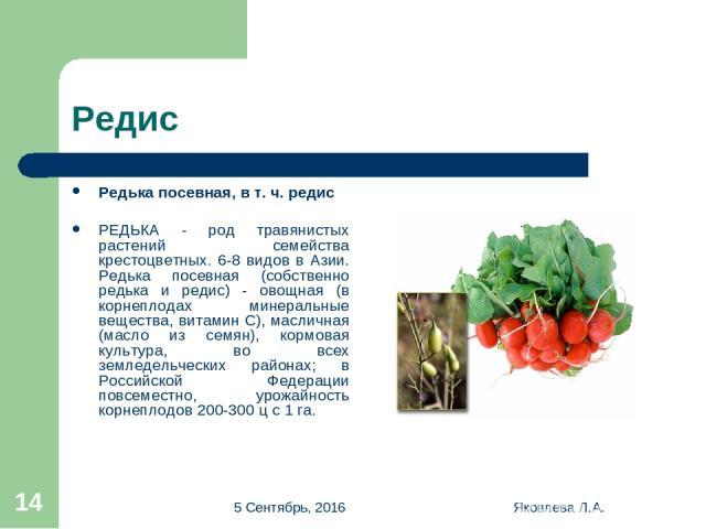 * Яковлева Л.А. * Редис Редька посевная, в т. ч. редис РЕДЬКА - род травянистых растений семейства крестоцветных. 6-8 видов в Азии. Редька посевная (собственно редька и редис) - овощная (в корнеплодах минеральные вещества, витамин С), масличная (мас…