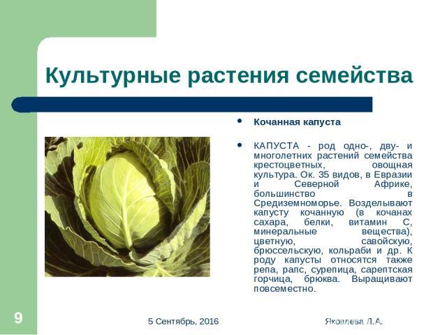 * Яковлева Л.А. * Культурные растения семейства Кочанная капуста КАПУСТА - род одно-, дву- и многолетних растений семейства крестоцветных, овощная культура. Ок. 35 видов, в Евразии и Северной Африке, большинство в Средиземноморье. Возделывают капуст…