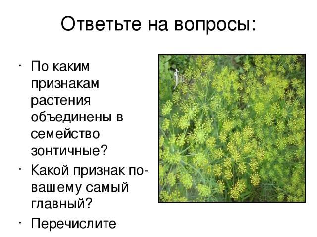 Ответьте на вопросы: По каким признакам растения объединены в семейство зонтичные? Какой признак по-вашему самый главный? Перечислите опасные ядовитые виды.