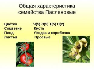 Общая характеристика семейства Пасленовые Цветок Ч(5) Л(5) Т(5) П(2) Соцветие Ки