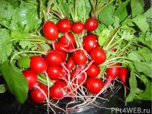 Однолетние или двулетние растения семейства Капустные. Съедобны, их выращивают к