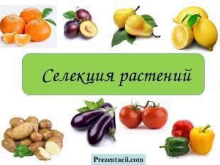 Селекция растений Prezentacii.com