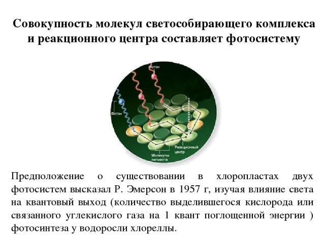 Совокупность молекул светособирающего комплекса и реакционного центра составляет фотосистему Предположение о существовании в хлоропластах двух фотосистем высказал Р. Эмерсон в 1957 г, изучая влияние света на квантовый выход (количество выделившегося…