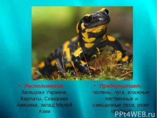 Расположение: Западная Украина, Карпаты, Северная Америка, запад Малой Азии Пред