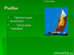 Рыбы Презентацию выполнил Гречушкин Тимофей Т.Гречушкин