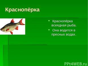Краснопёрка Краснопёрка всеядная рыба. Она водится в пресных водах.