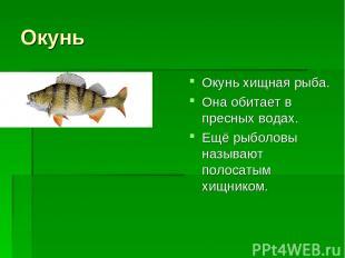 Окунь Окунь хищная рыба. Она обитает в пресных водах. Ещё рыболовы называют поло