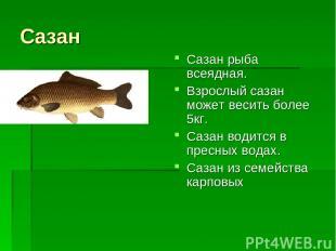 Сазан Сазан рыба всеядная. Взрослый сазан может весить более 5кг. Сазан водится