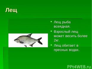 Лещ Лещ рыба всеядная. Взрослый лещ может весить более 2кг. Лещ обитает в пресны