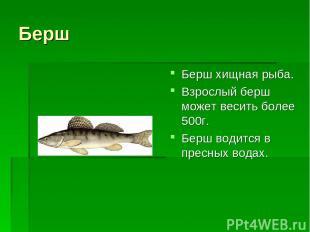 Берш Берш хищная рыба. Взрослый берш может весить более 500г. Берш водится в пре