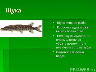 Щука Щука хищная рыба. Взрослая щука может весить более 10кг. Если щука укусила,
