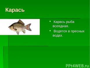 Карась Карась рыба всеядная. Водятся в пресных водах.