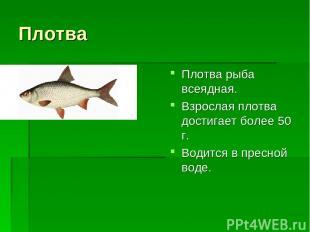 Плотва Плотва рыба всеядная. Взрослая плотва достигает более 50 г. Водится в пре