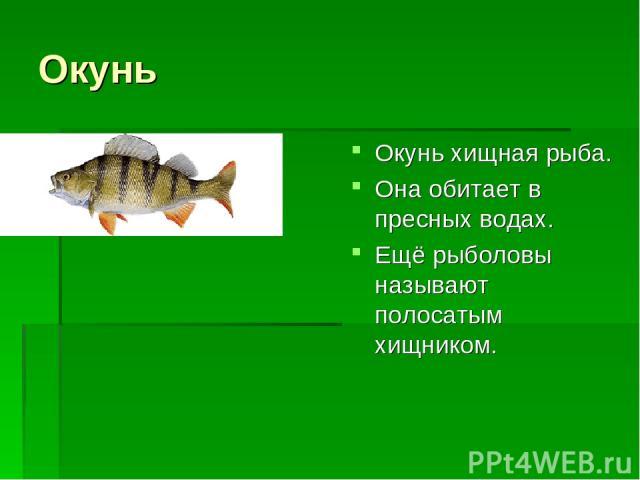 Окунь Окунь хищная рыба. Она обитает в пресных водах. Ещё рыболовы называют полосатым хищником.