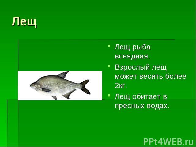 Лещ Лещ рыба всеядная. Взрослый лещ может весить более 2кг. Лещ обитает в пресных водах.