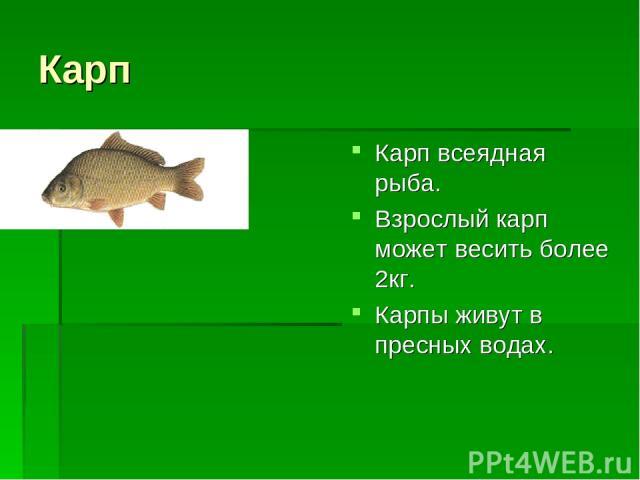 Карп Карп всеядная рыба. Взрослый карп может весить более 2кг. Карпы живут в пресных водах.