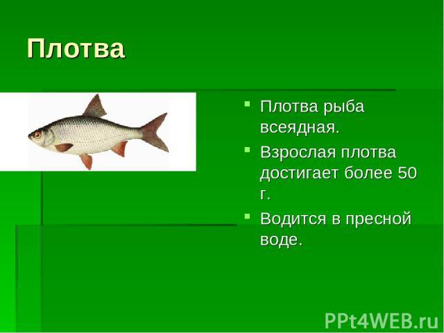 Плотва Плотва рыба всеядная. Взрослая плотва достигает более 50 г. Водится в пресной воде.